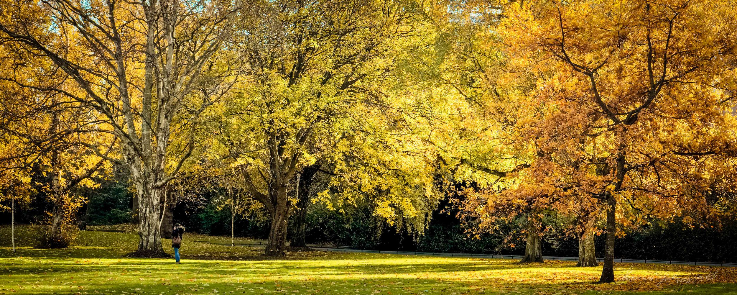 Tree lined panorama - Taken with a Fuji XE1