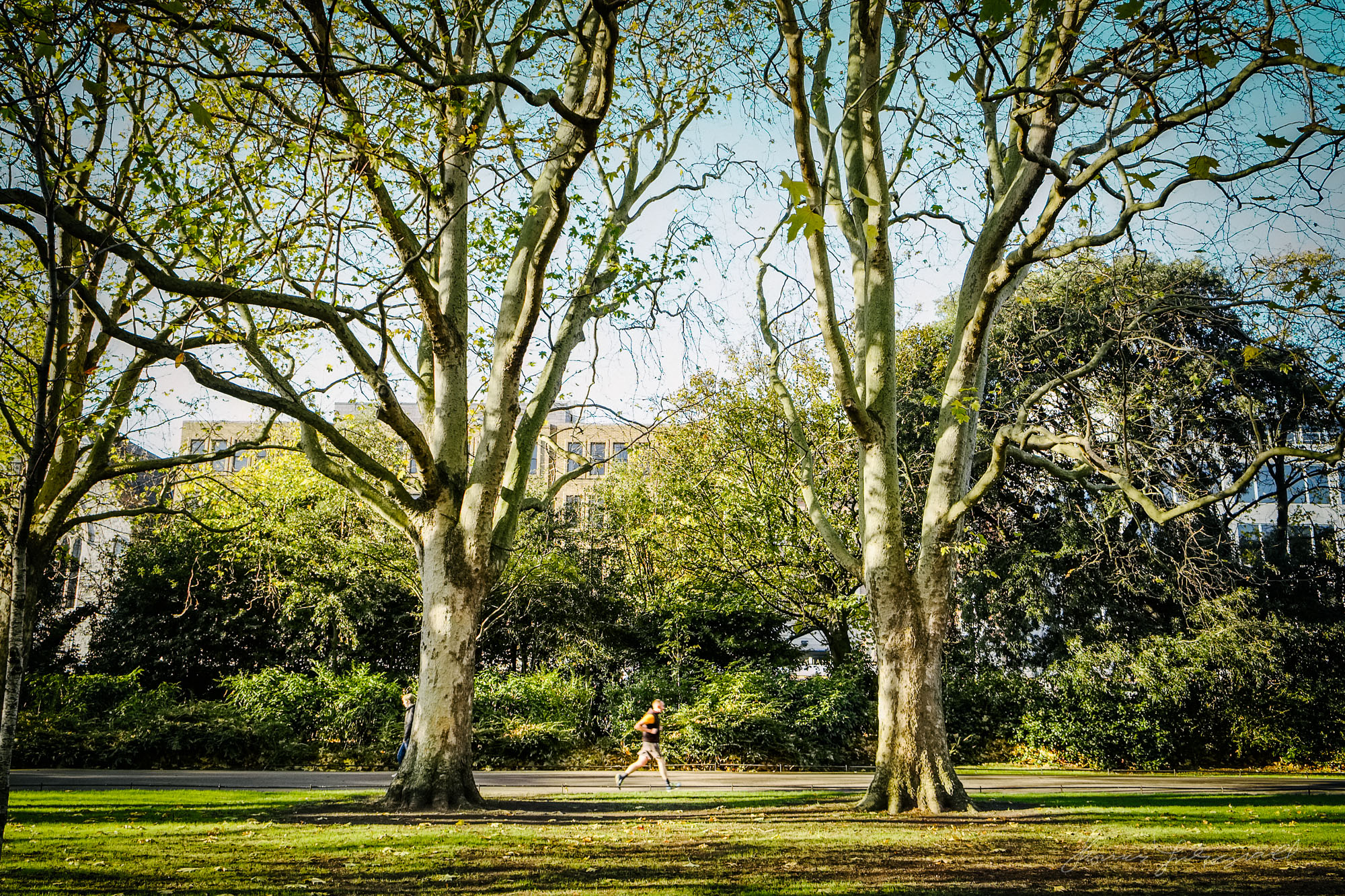 Running through the Trees - Taken with a Fuji XE1