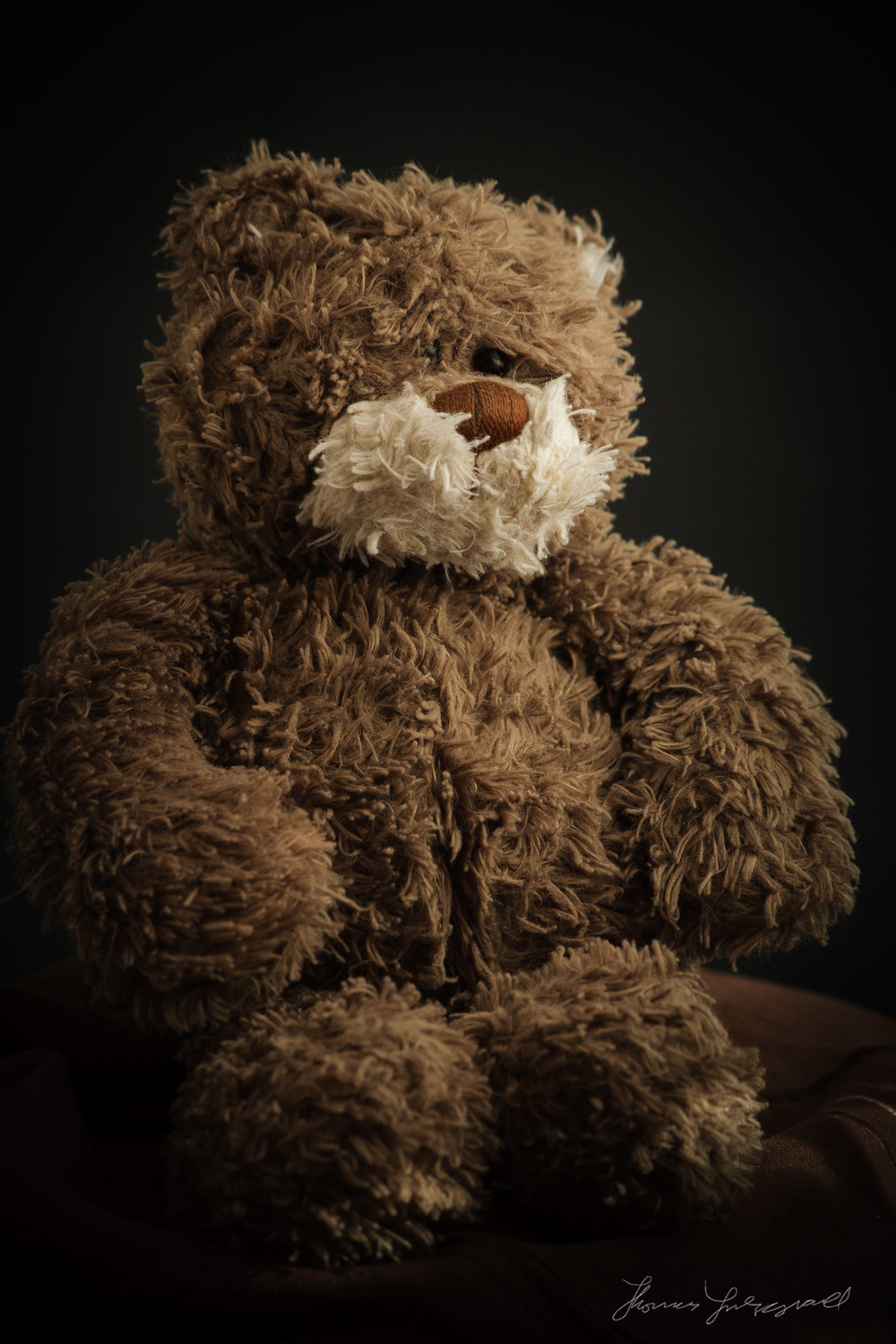 Little Brown Bear Teddy Bear Portrait
