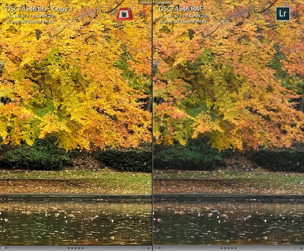 foliage-comparison