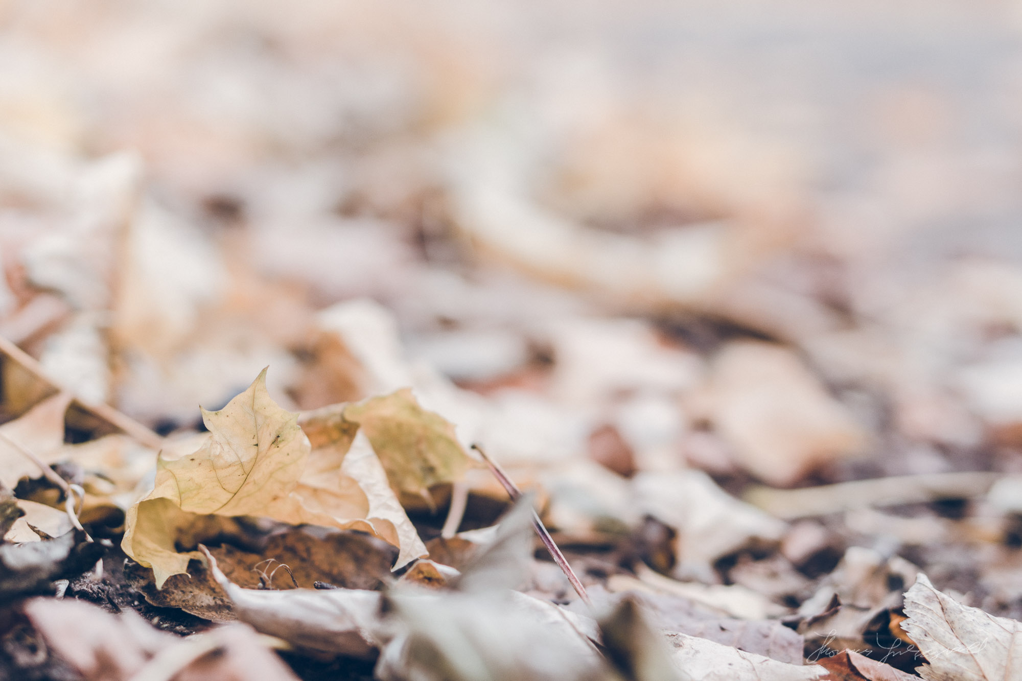 The Last Few Leaves: Sony NEx-7