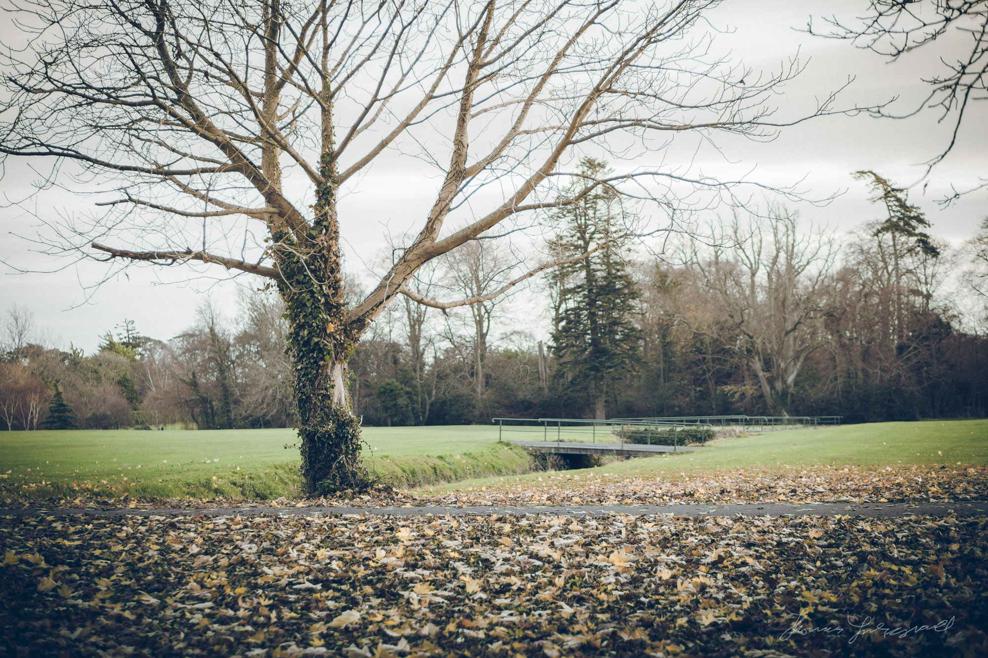 A Lonely Tree in Marley Park. Sony Nex7, Processed in Lightroom