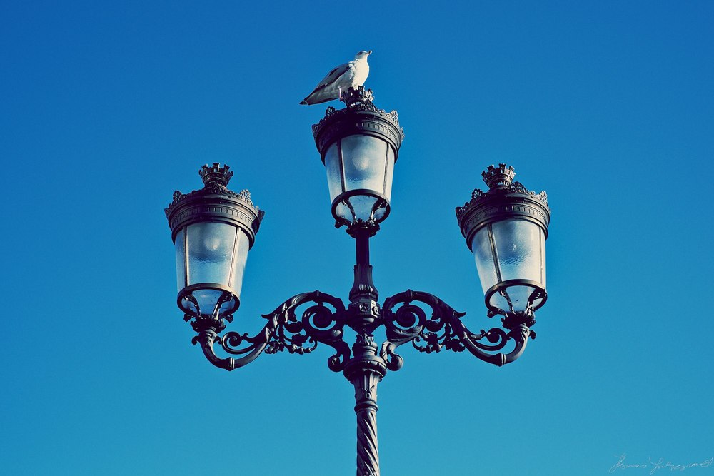 birds-and-lamp-shade