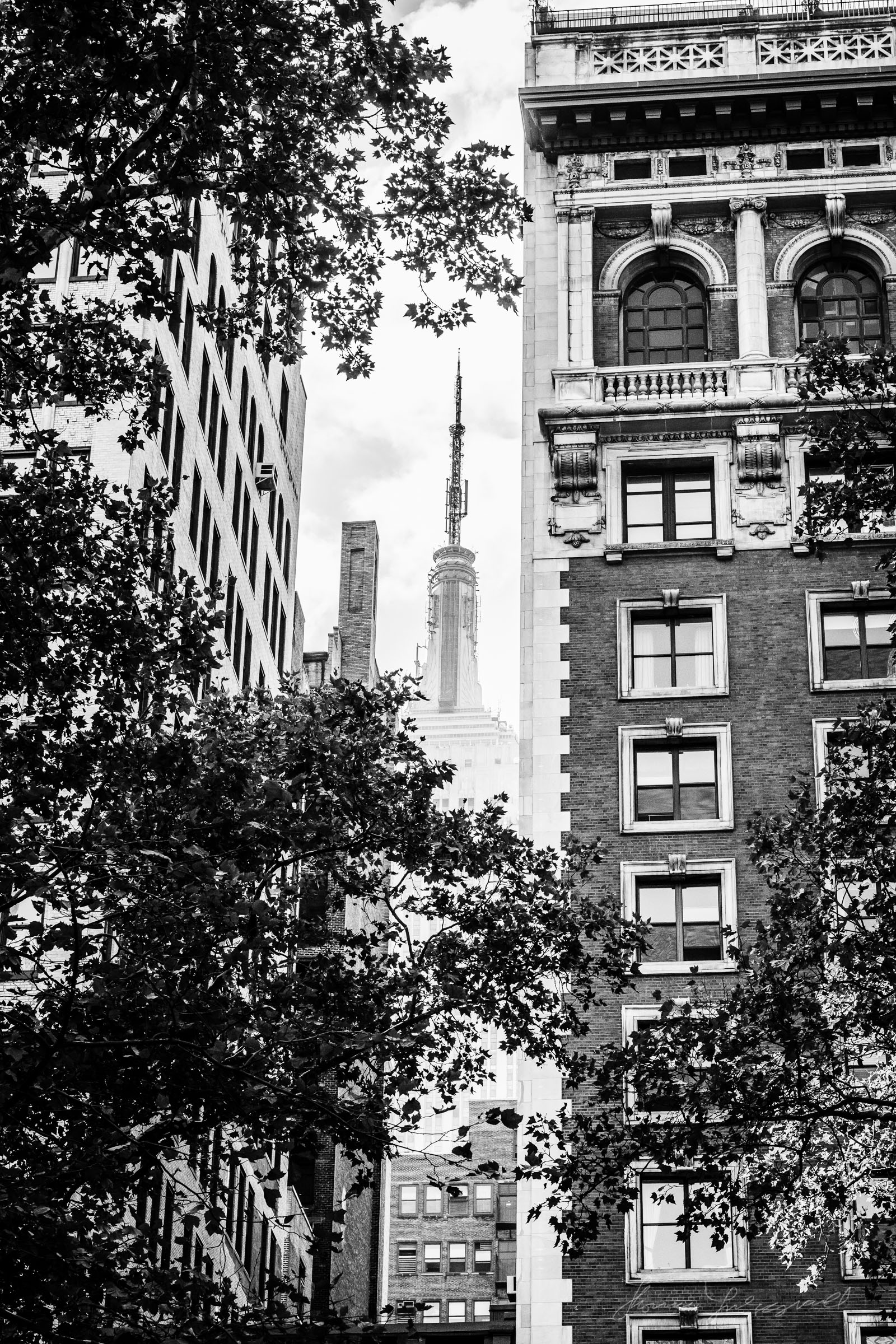 Empire State through the Trees of Bryant Park