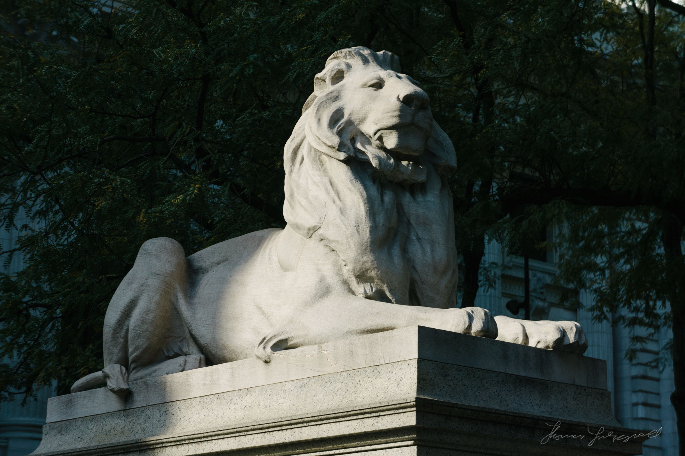 The Lion outside the New York City Public Library