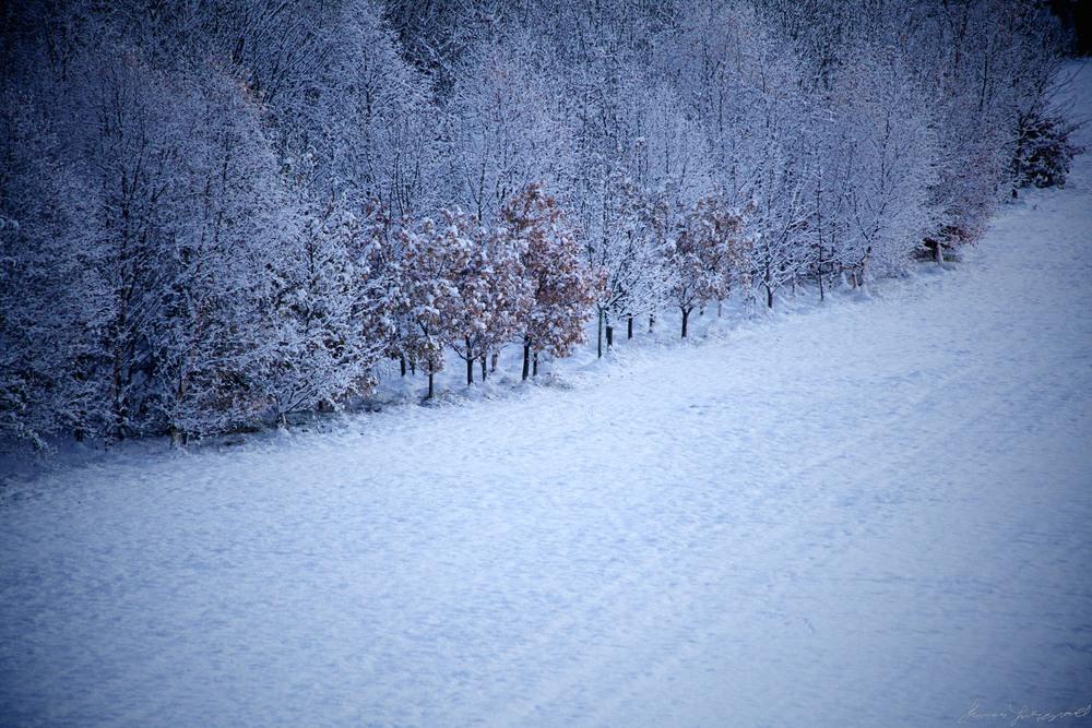 cold-snowy-scene