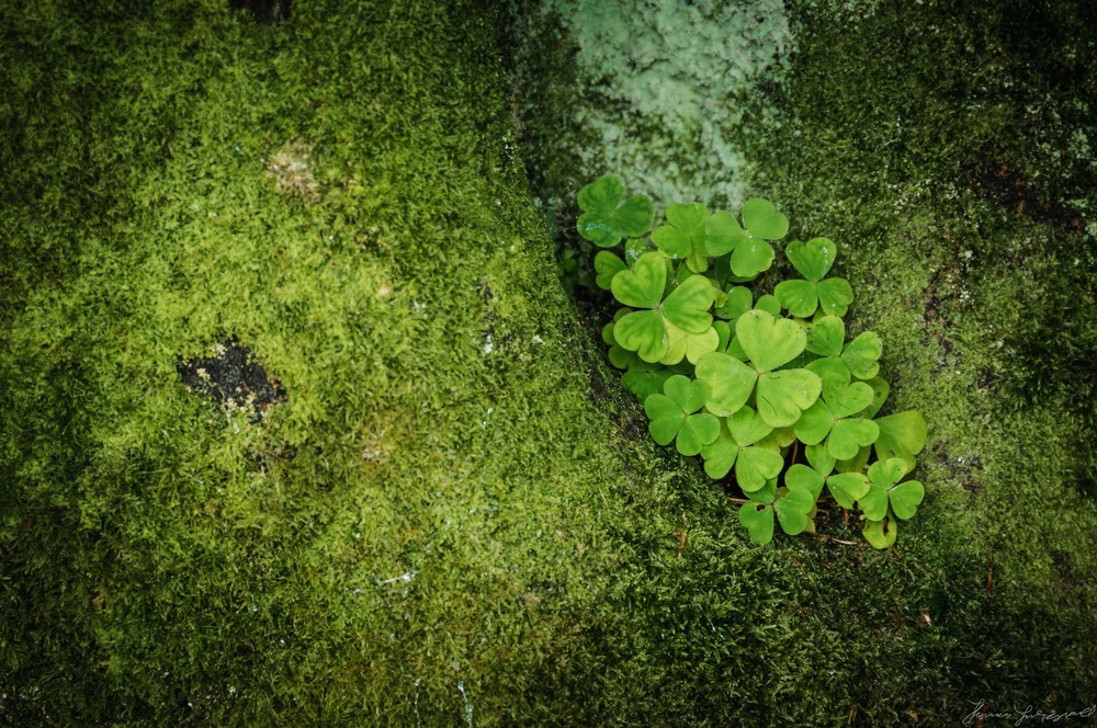 harmonious- greens 4