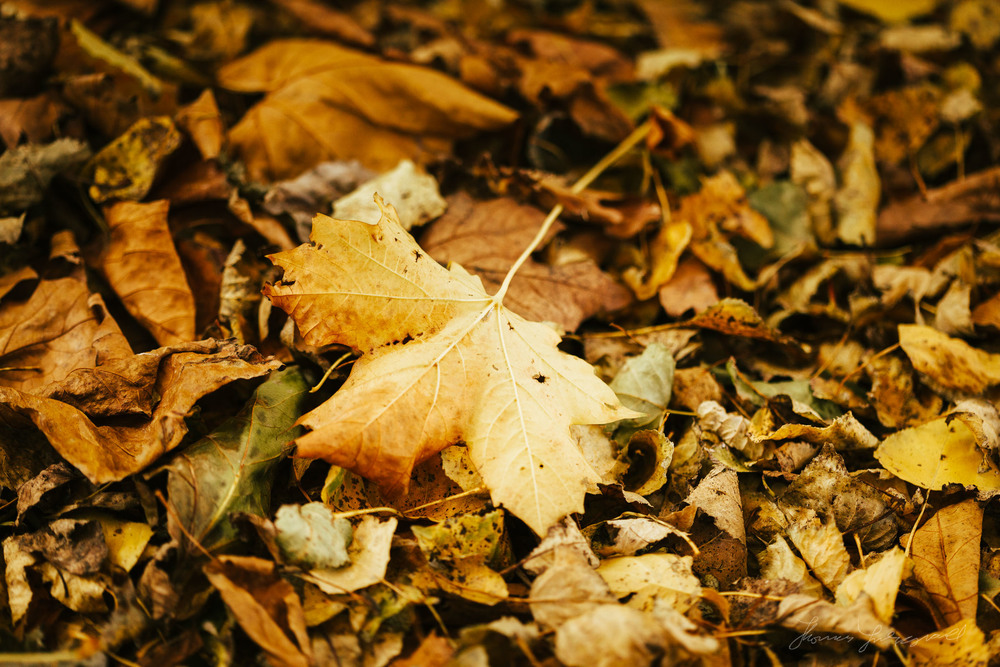 Yellow leaf on fallen leaves