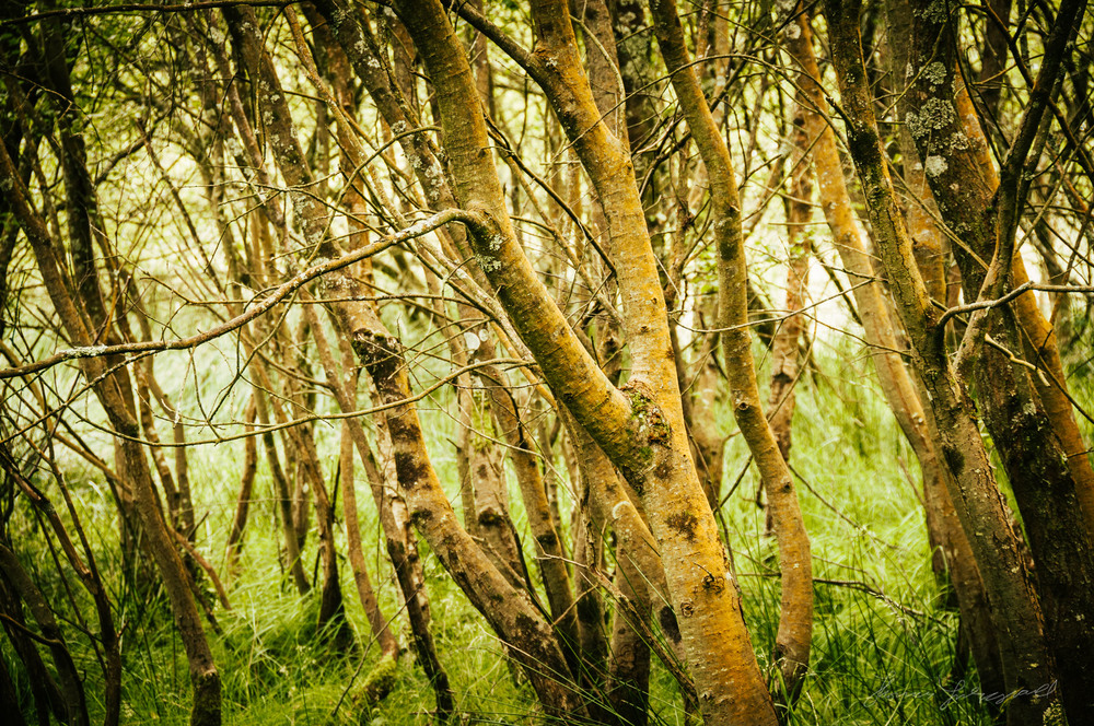 Trees - With Landscape Gold Lightroom Presets Applied
