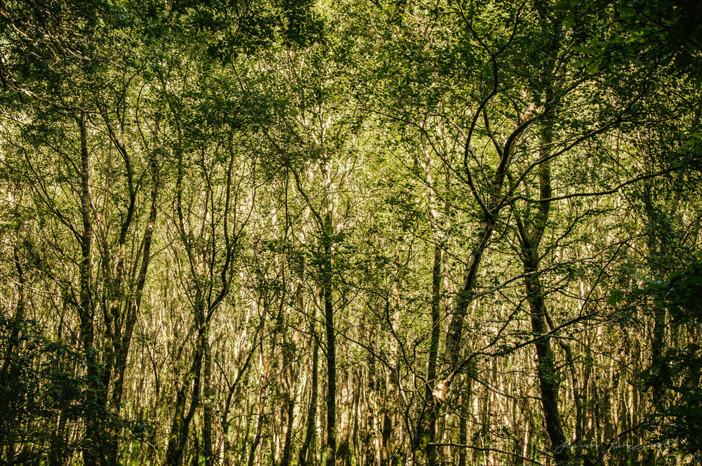 A Canopy of Trees - With Landscape Gold Lightroom Presets Applied