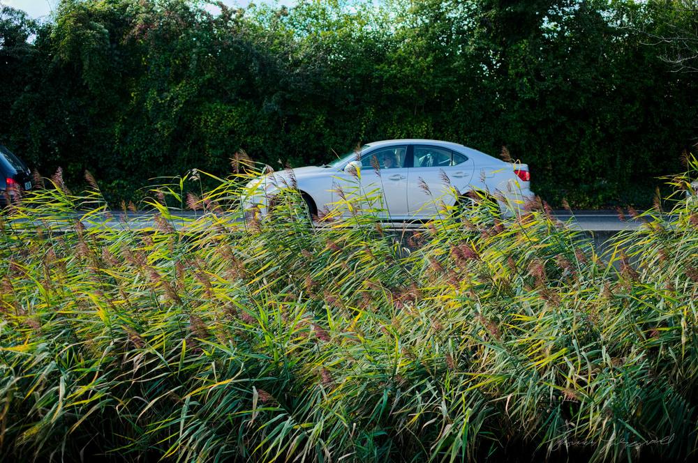 Car through the reeds