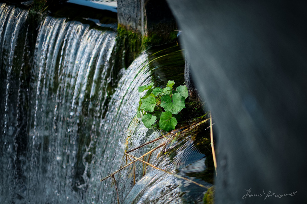 Water falling over the canal lock gates