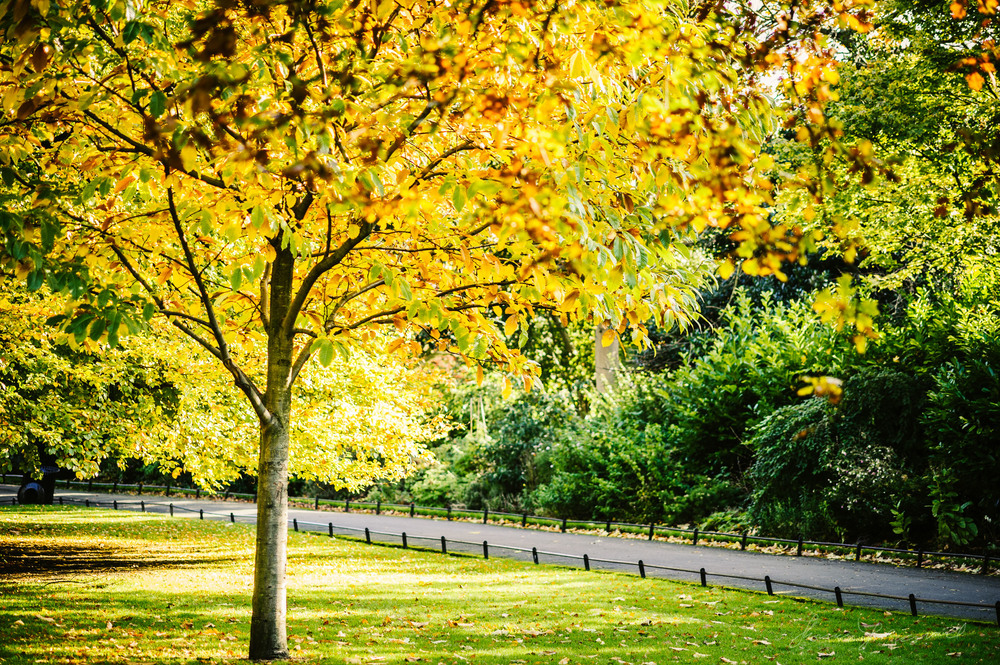 Autumn Trees - With Landscape Gold Lightroom Presets Applied