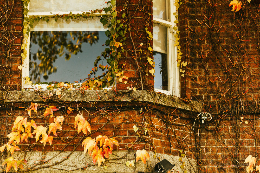 Autumn ivy - With Landscape Gold Lightroom Presets Applied