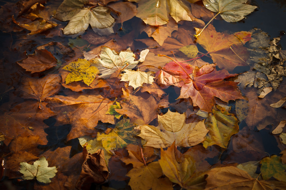 leaves-before.jpg
