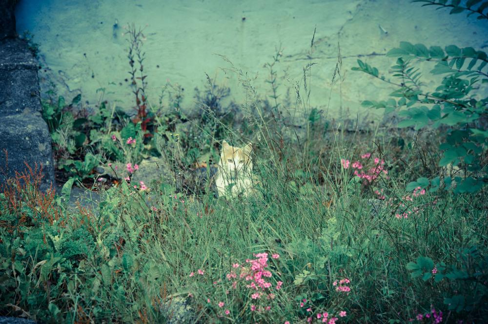 cat-before.jpg