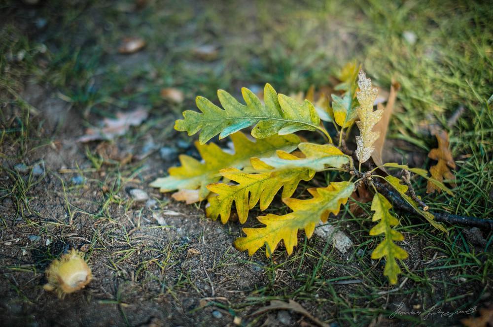 Delicate-Nature-Fuji-04.jpg