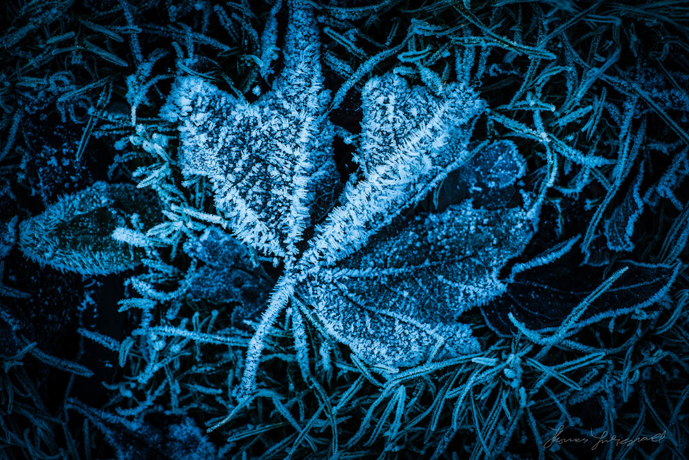 first-frost-20.jpg