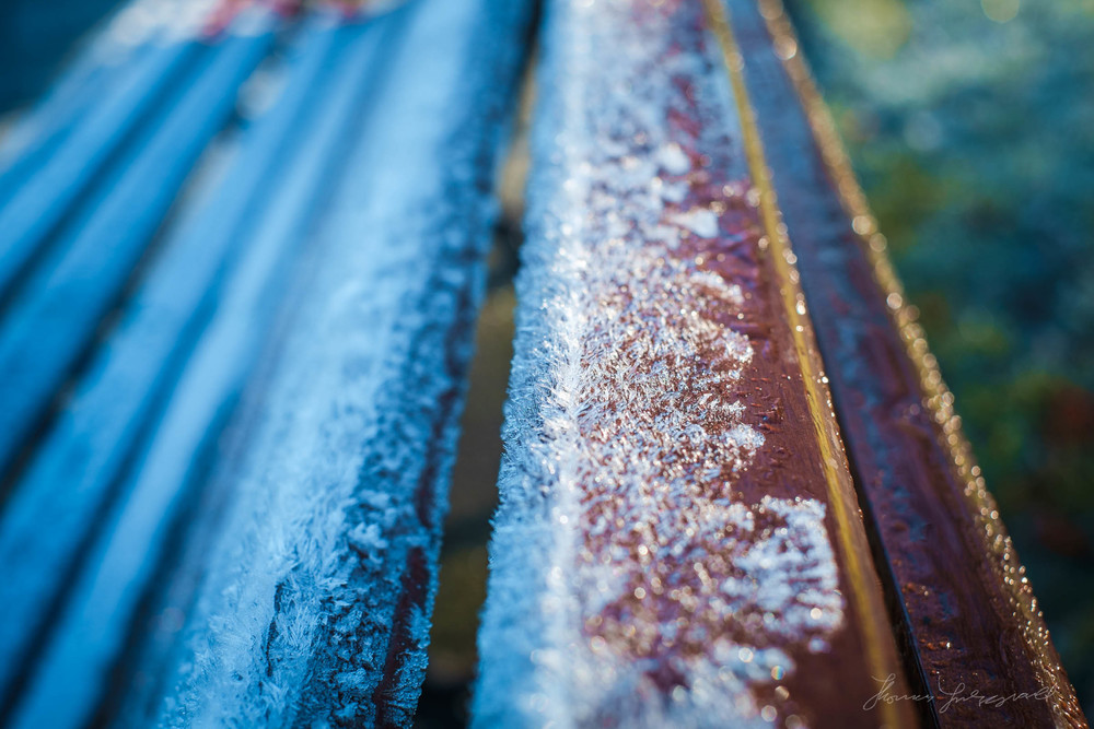 first-frost-19.jpg