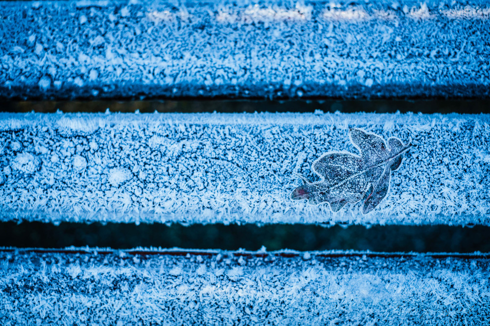 first-frost-18.jpg