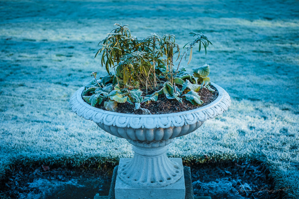 first-frost-16.jpg