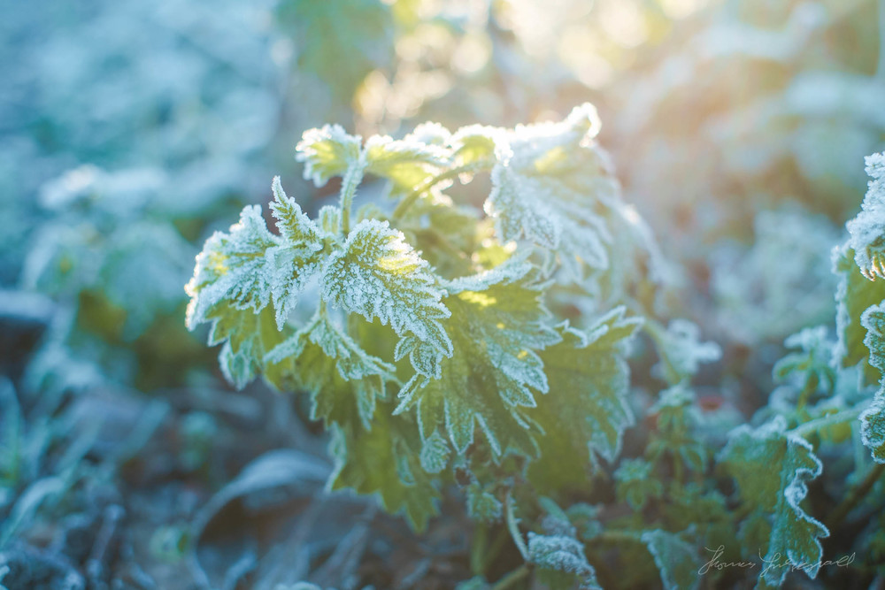 first-frost-09.jpg
