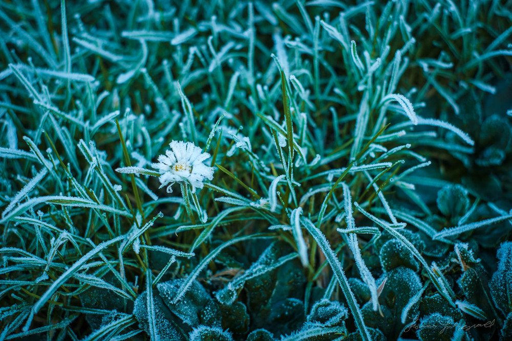 first-frost-05.jpg