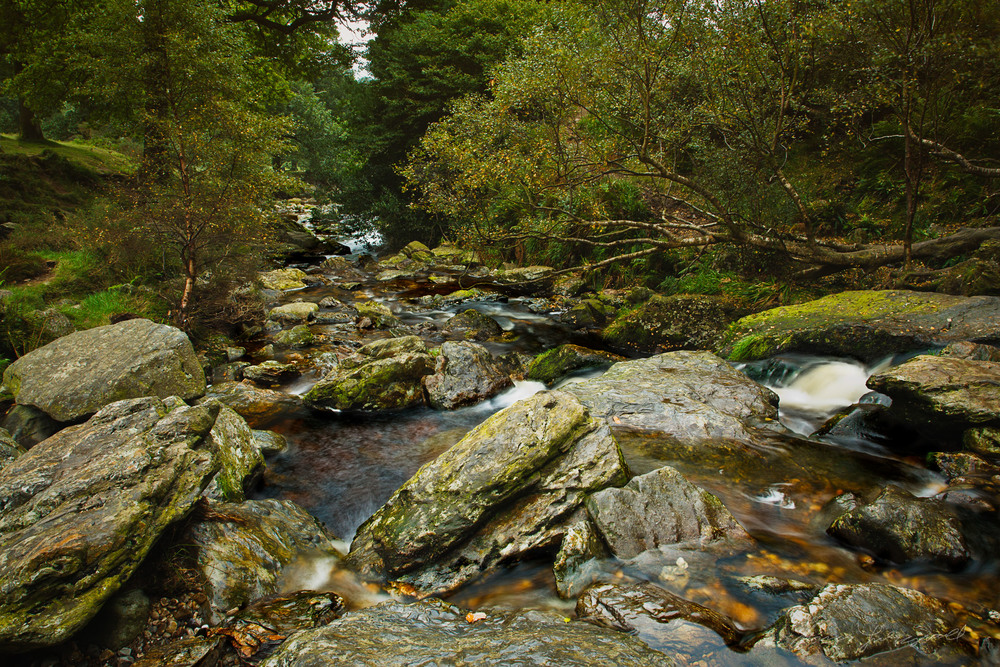 Forest River In the Wicklow Mountains