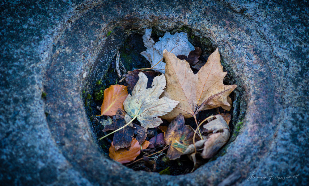 Autumn leaves in a hole