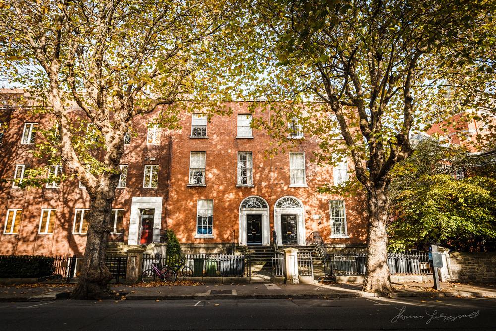 Dublin Buildings and Autumn Leaves