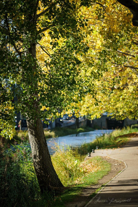 Autumn-Dublin-Sony-A6000-33.jpg