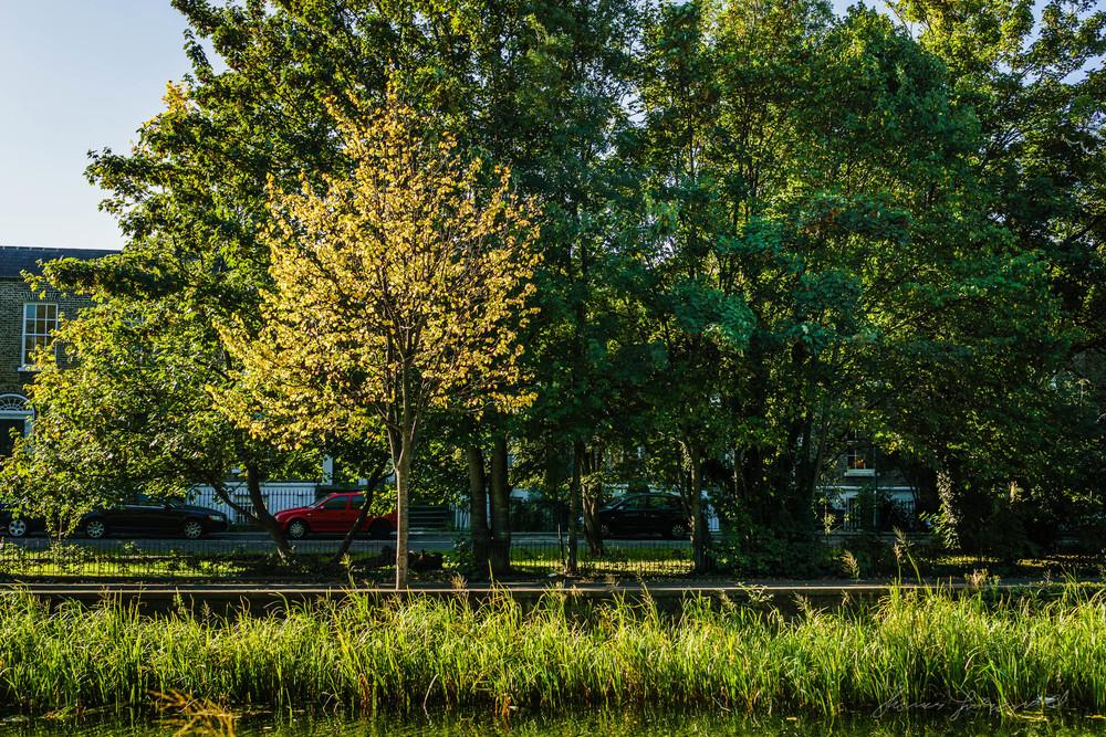 Autumn-Dublin-Sony-A6000-08.jpg