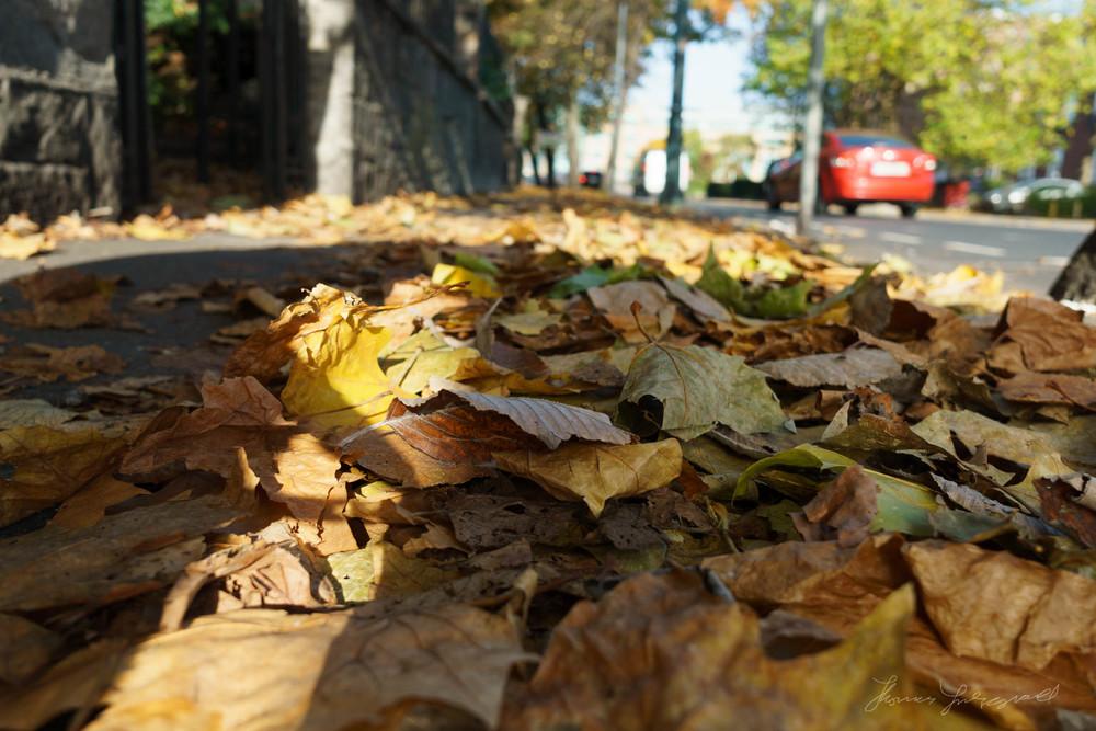 Autumn-Dublin-Sony-A6000-19.jpg