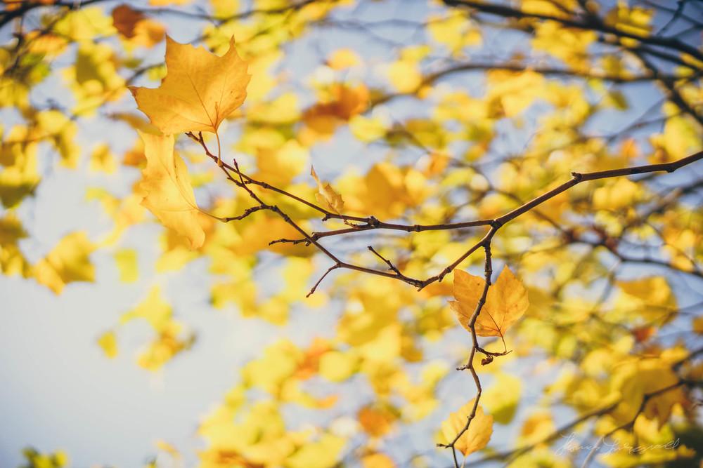 Autumn-Dublin-Sony-A6000-37.jpg