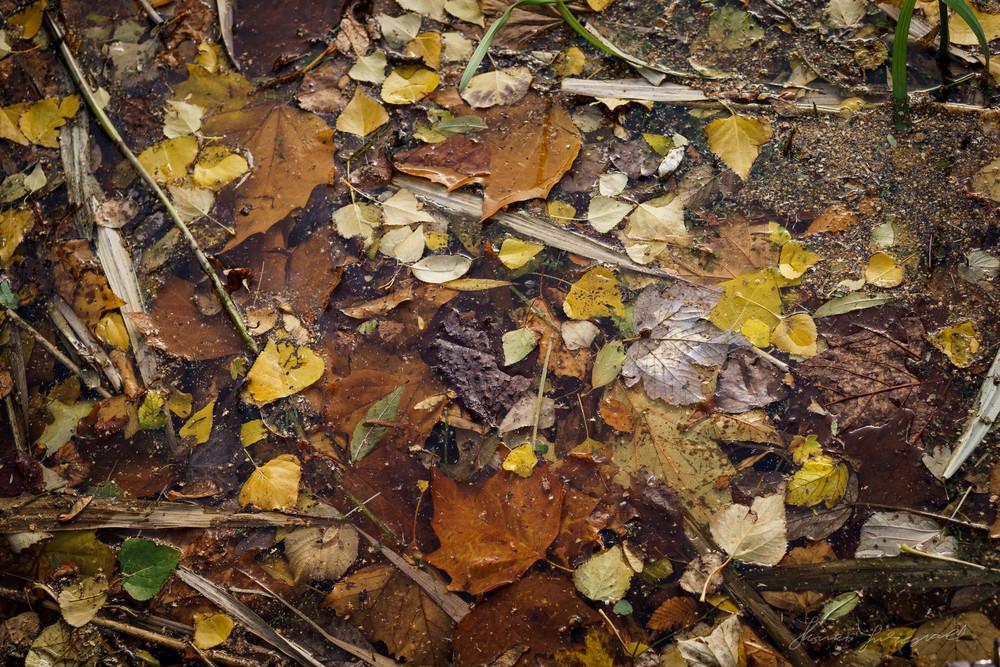 Autumn-Dublin-Sony-A6000-40.jpg