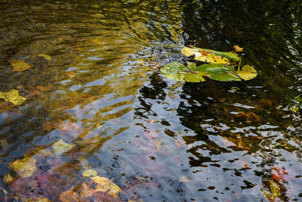 Autumn-Dublin-Sony-A6000-62.jpg