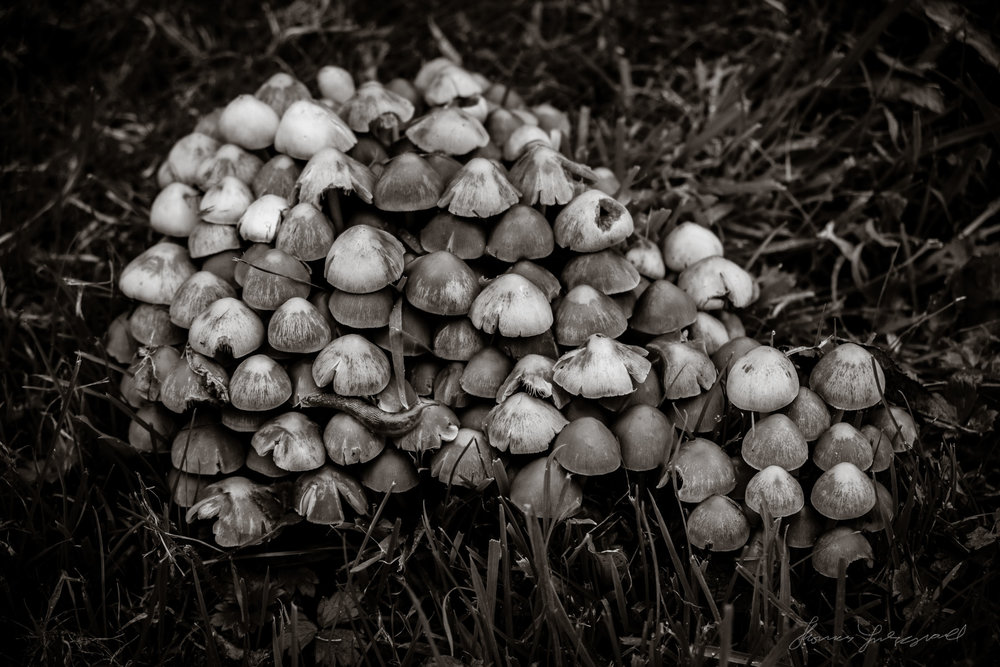 Mushrooms - Fuji X-Pro 2, 18-55mm f2.8-4. Processed with  Coffee Tones for Lightroom