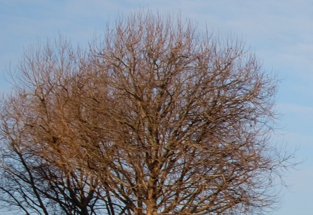 Lightroom-Tree-Crop