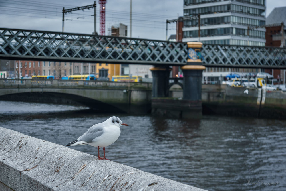 Bird by the Quay - Lightroom HDR