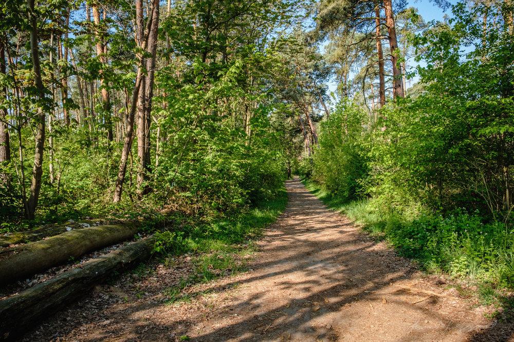 Darmstadt-Forest--0078.jpg