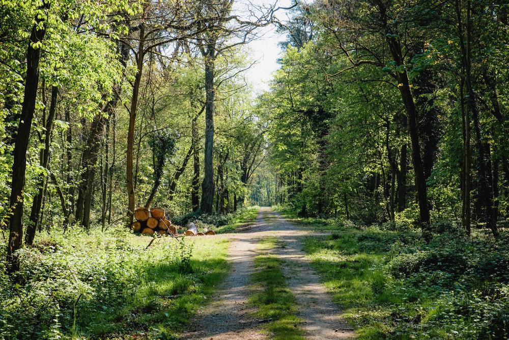 Darmstadt-Forest--0162.jpg