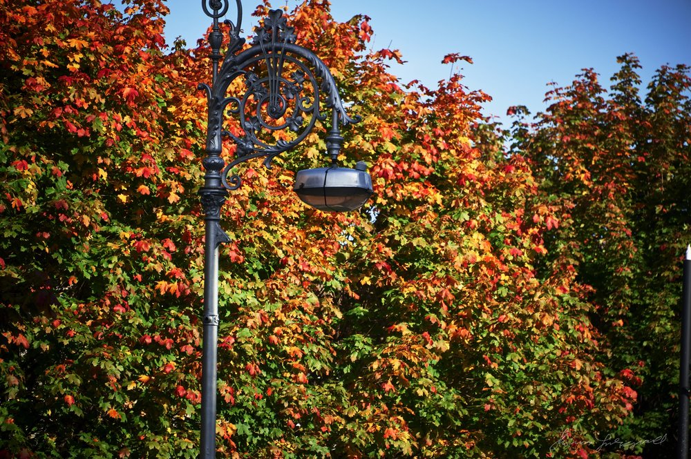 Autumn-Colours-2017-17.jpg