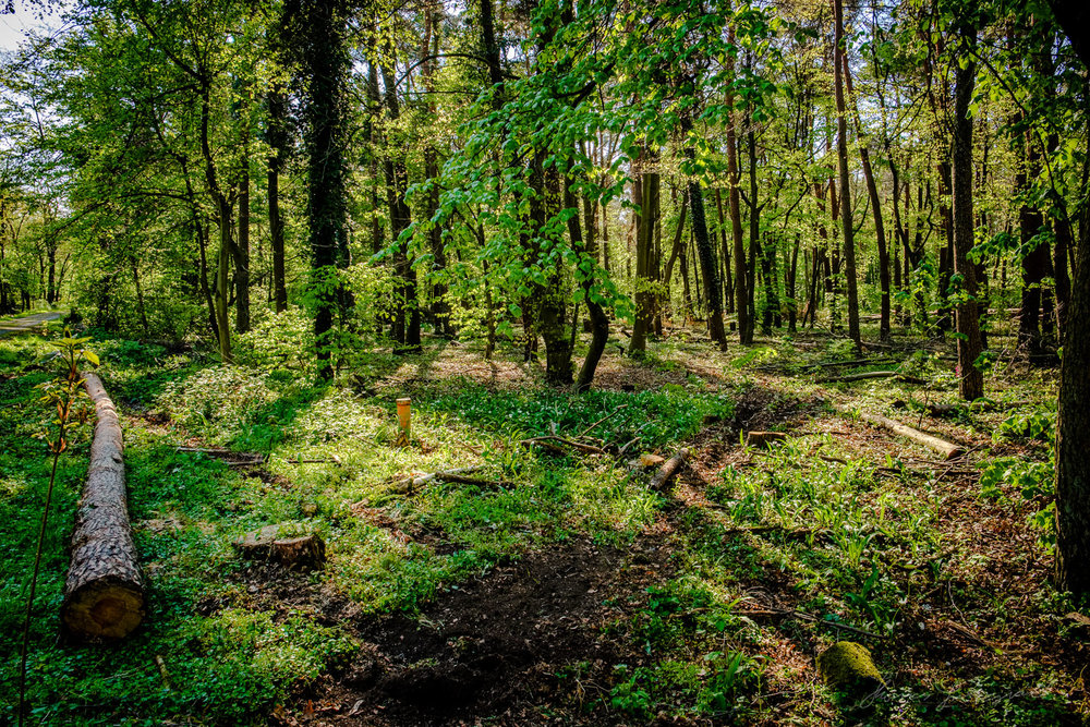 Westwald Woods DarmstadtTwo years with Fuji X-Pro2 - Landscape a