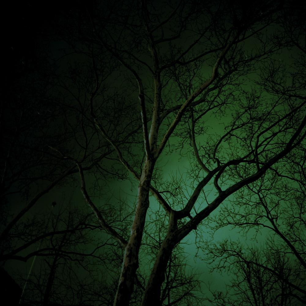 Tree_Print.jpg