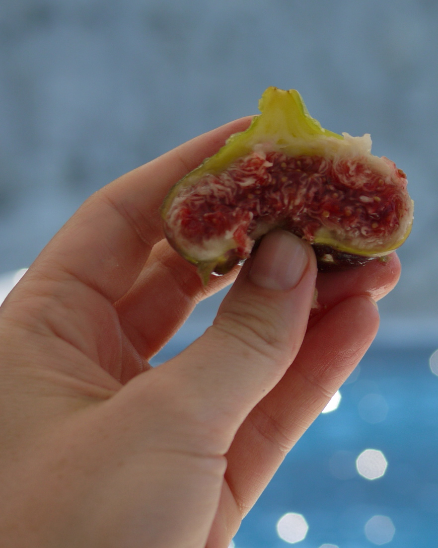 This fig is arguably frowning, yes... but I suggest that all figs are happy regardless of the shape they take when you smoosh them with your thumb after breaking them in two with your hands.All that sun and sea--how could they not be????