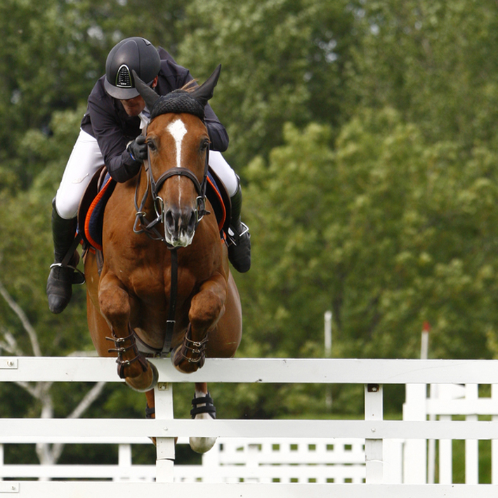 The demands of high level sport can put strains on a horse's musculoskeletal system