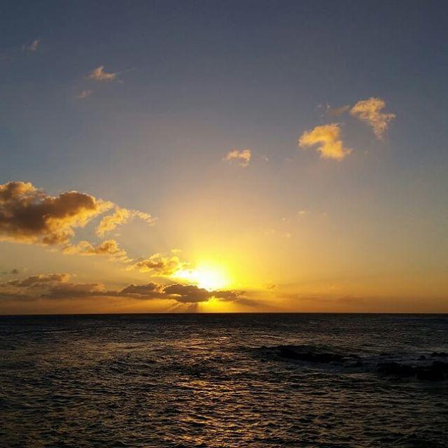 Last sunset and sunrise in #kauai for this mermaid. See you next April, island darlings, for more #botanicalillustration at @ntbg ! Bonus: papaya drawing #wip , geckos, rainbows, honu!