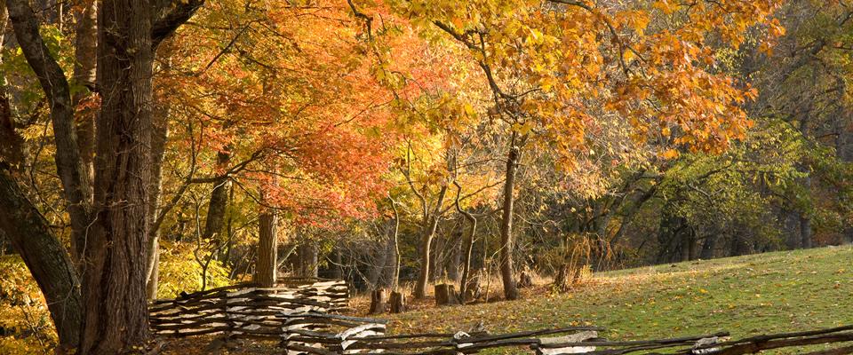 fall-fence.jpg