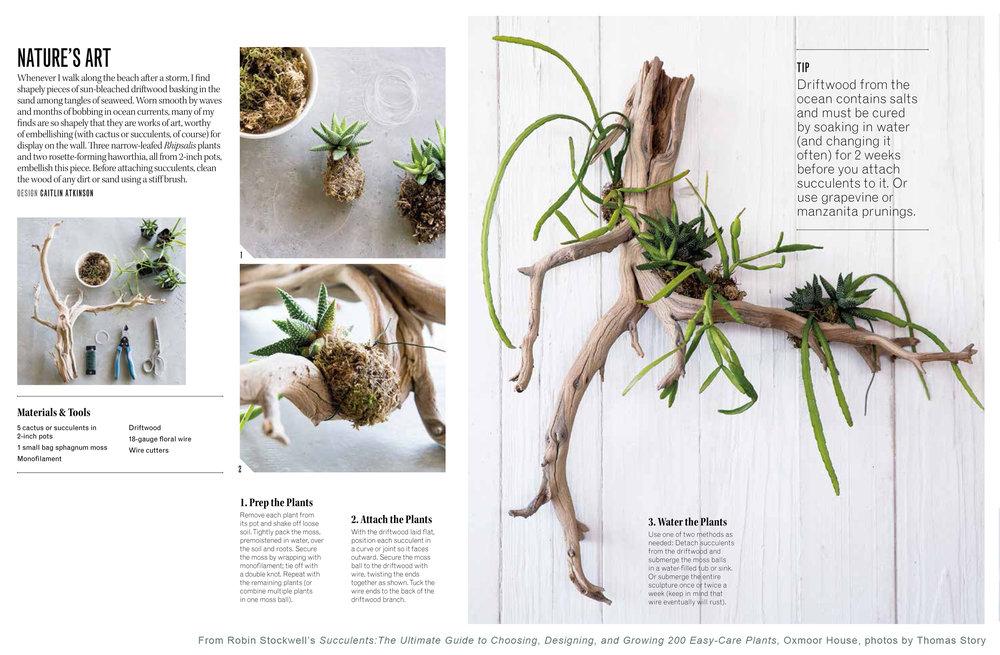 Succulents_driftwood.jpg