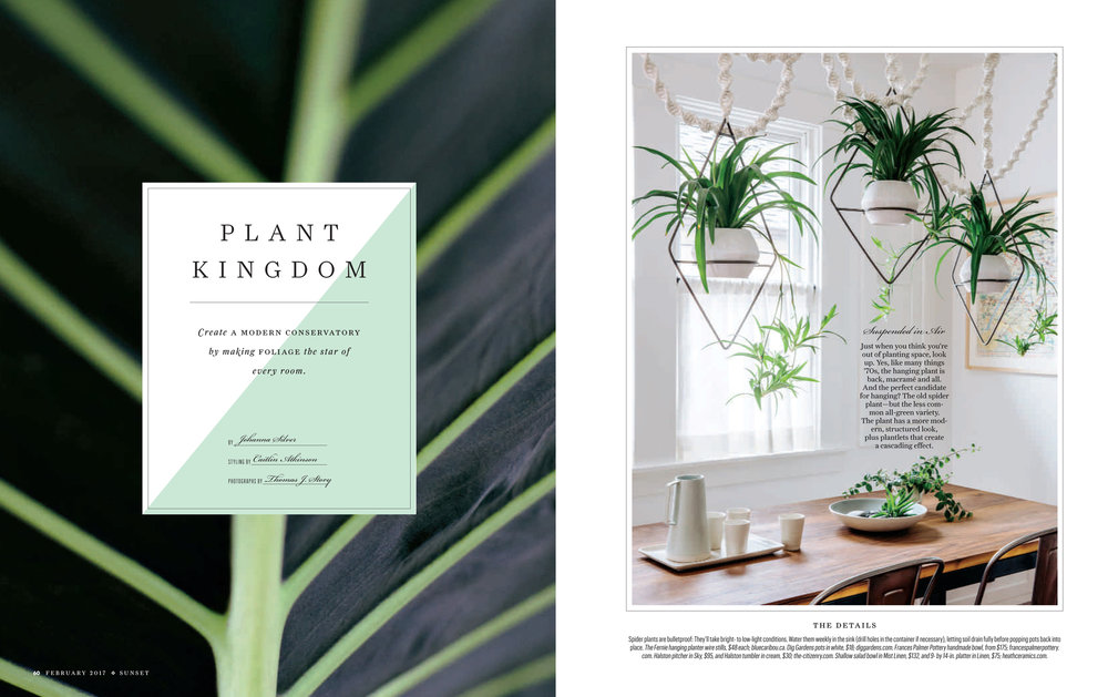 HousePlants-1.jpg
